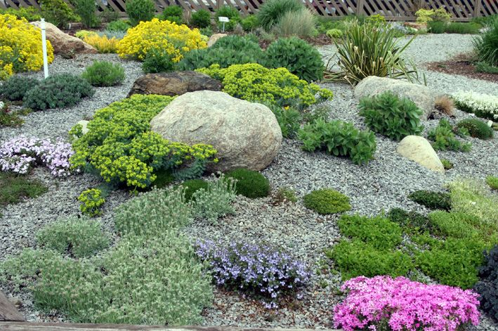 rock gravel and drought tolerant