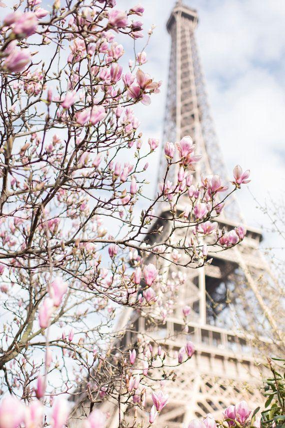 Paris Photograph - Eiffel Tower and Magnolia,Travel Photograph, French Urban Home Decor, Large Wall Art #eiffeltower