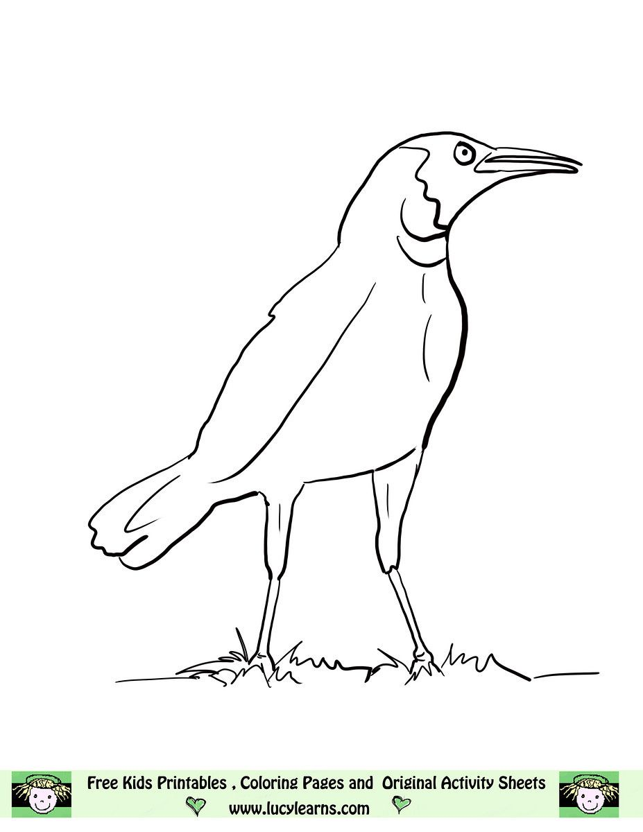 Crow Coloring Pages 19 Crow Coloring Crow Coloring 3 Free