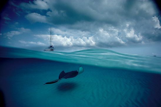 Stingray with Sailboat, Grand Cayman