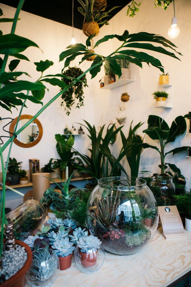 Plante D Intérieur Tendance agave, boutique de plantes d'intérieur et déco tendance