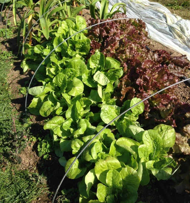 What Vegetables To Plant Now: Plants, Fall Crops, Vegetables