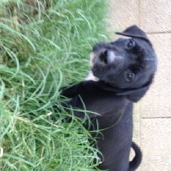 Age 3 Months Gender Female Breed Lab Shar Pei Mix This Puppy Is Part Of A Litter Of Six She Puppies Shar Pei Mix Animals Beautiful
