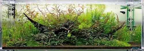 Oliver Knott | Planted aquarium, Aquascape, Tropical fish ...