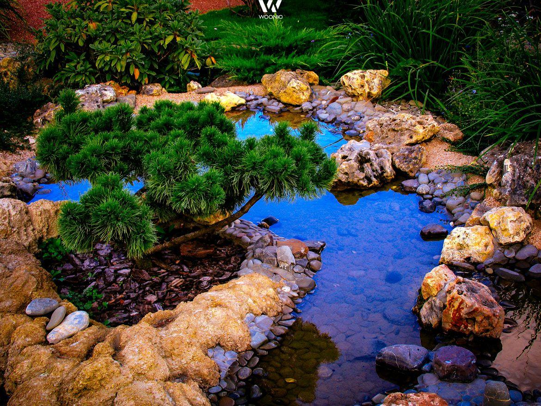 Ein Optisch Vollkommen Natürlicher Teich Im Garten