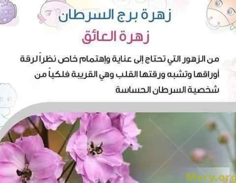 برج السرطان اليوم مميزاته وعيوبه كاملة موقع مصري Lockscreen Screenshot Lockscreen