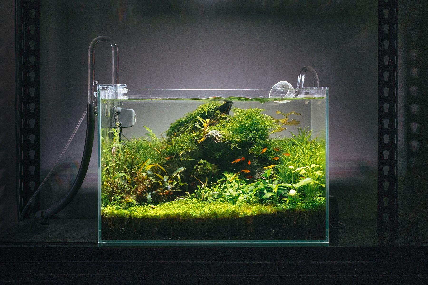 My 1 5ft Community Tank Aquariums Community Tanks Aquascape Aquarium Aquarium