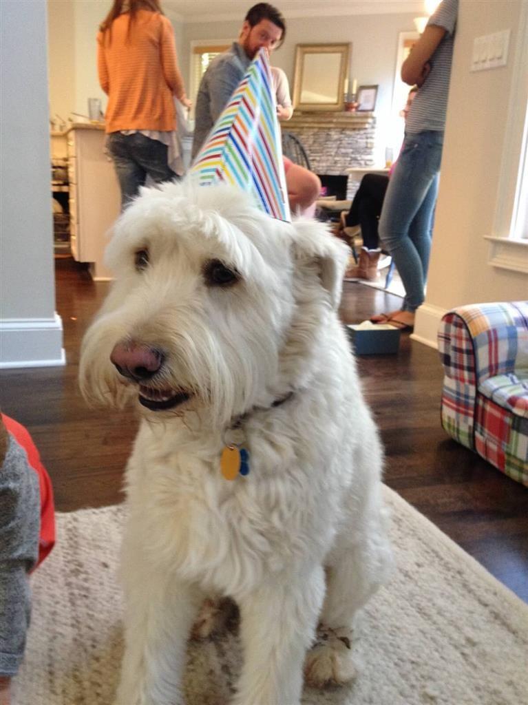 Lost Dog Male Atlanta Ga Usa 30305 Losing A Dog Dogs Terrier