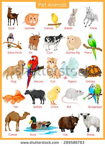 Easy To Edit Vector Illustration Of Chart Of Pet Animals Animals For Kids Animals Name In English Animals