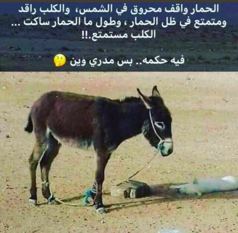 Pin By Alwan Alhamdani On ابتسامه Funny Jokes Lol