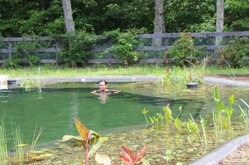 First Bionova Natural Pool In Ct By Freddy 39 S Landscape Company Fairfield Ct Pools