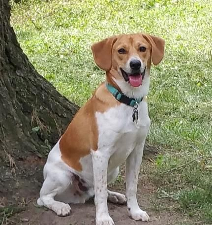 Adopt Murphy Adopted On Terrier Mix Terrier Mix Dogs Adoption