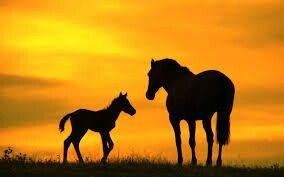 Good little foal
