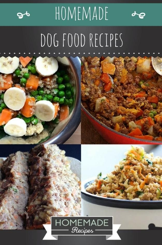 10 homemade dog food recipes that can save you money mascotas 10 homemade dog food recipes that can save you money forumfinder Gallery
