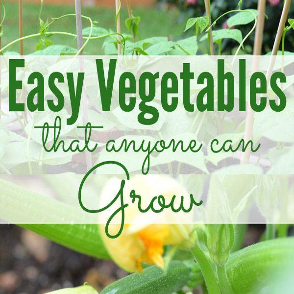 Easy Vegetables For Beginning Gardeners Gardening For 640 x 480