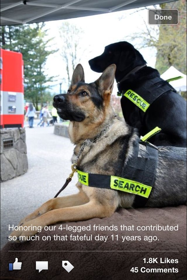 Search Rescue Dogs From 9 11 Most Have Passed On By Now