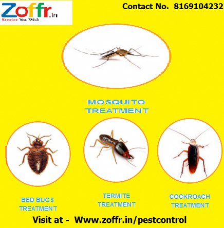 The Basics Of Pest Control With Images Pest Control Pest Control Services Insects