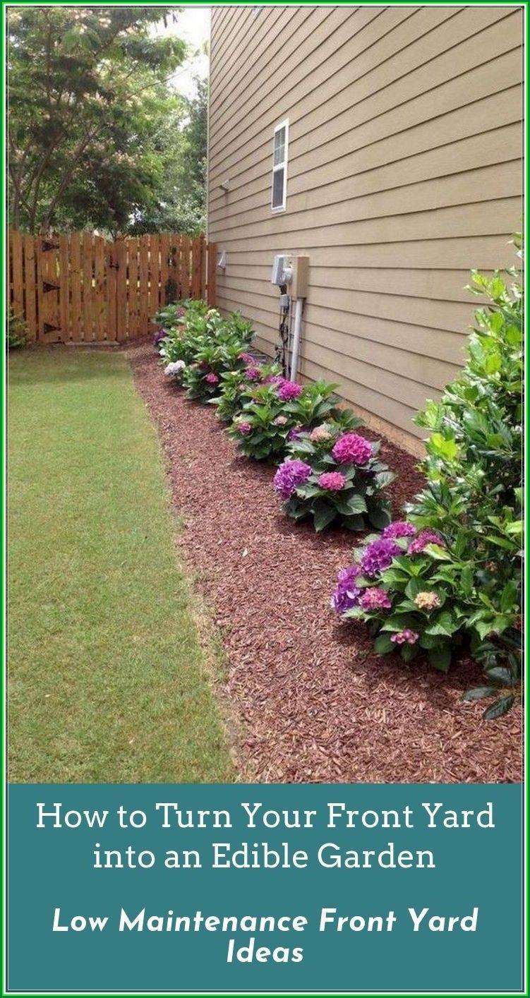 Low Maintenance Front Yard Ideas You Must Know - Rachyl ...