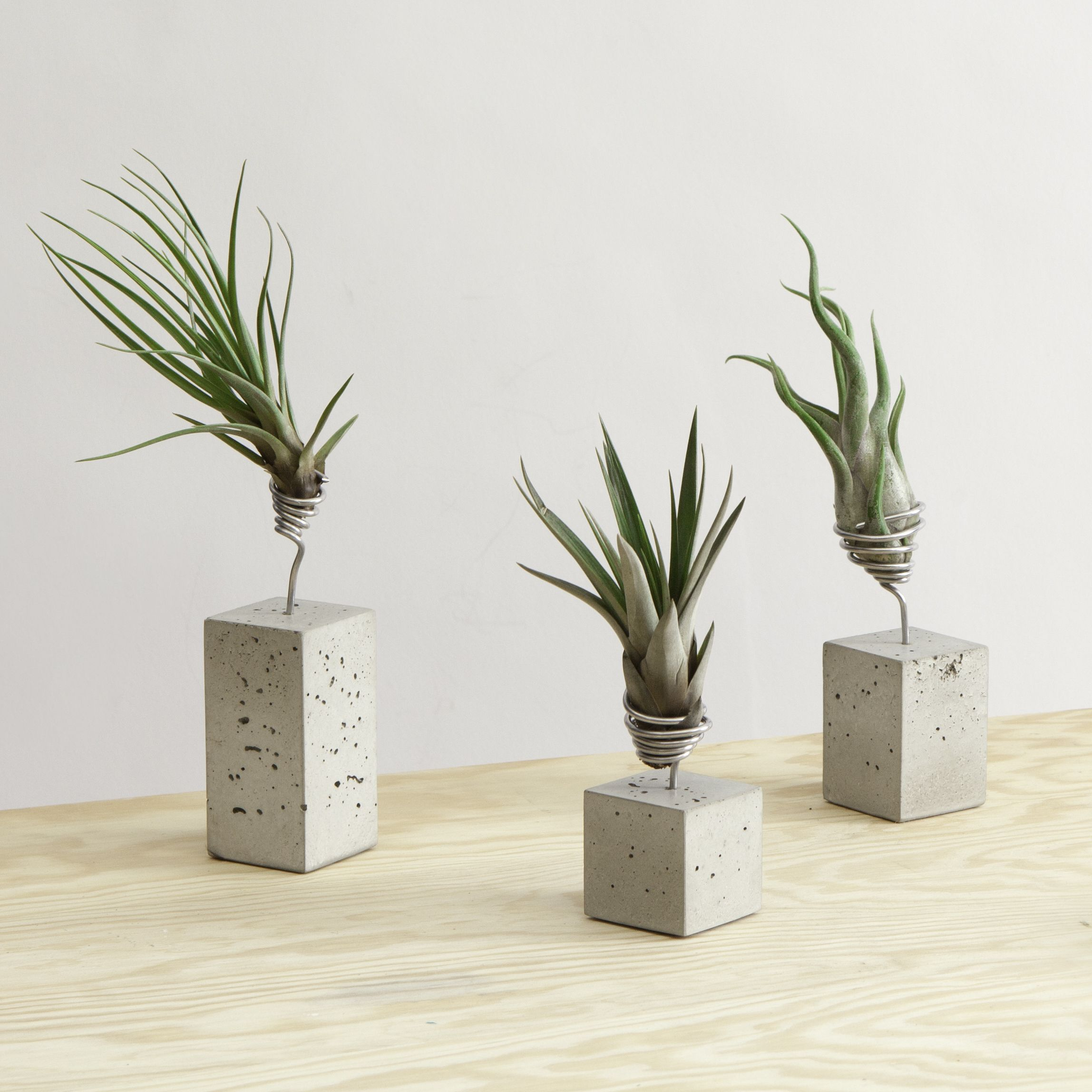 Diy inspiration concrete wire air plant holders air for Air plant holder ideas