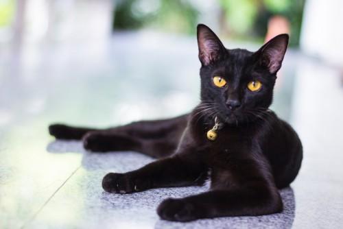 Суеверие или истина Черните котки и мистерията около тях
