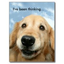 Golden Retriever I've Been Thinking Postcard by #AugieDoggyStore