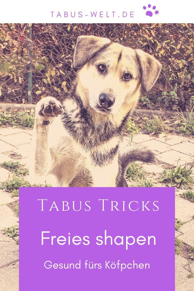 Freies Shapen Gut Furs Kopfchen Tabus Welt Hunde Hundetricks Tricks Fur Hunde
