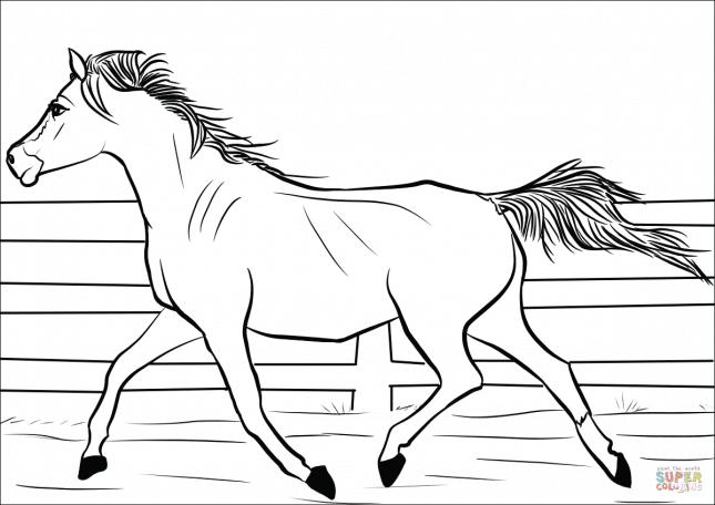 ausmalbilder pferde einfach  20 ideen für ausmalbilder