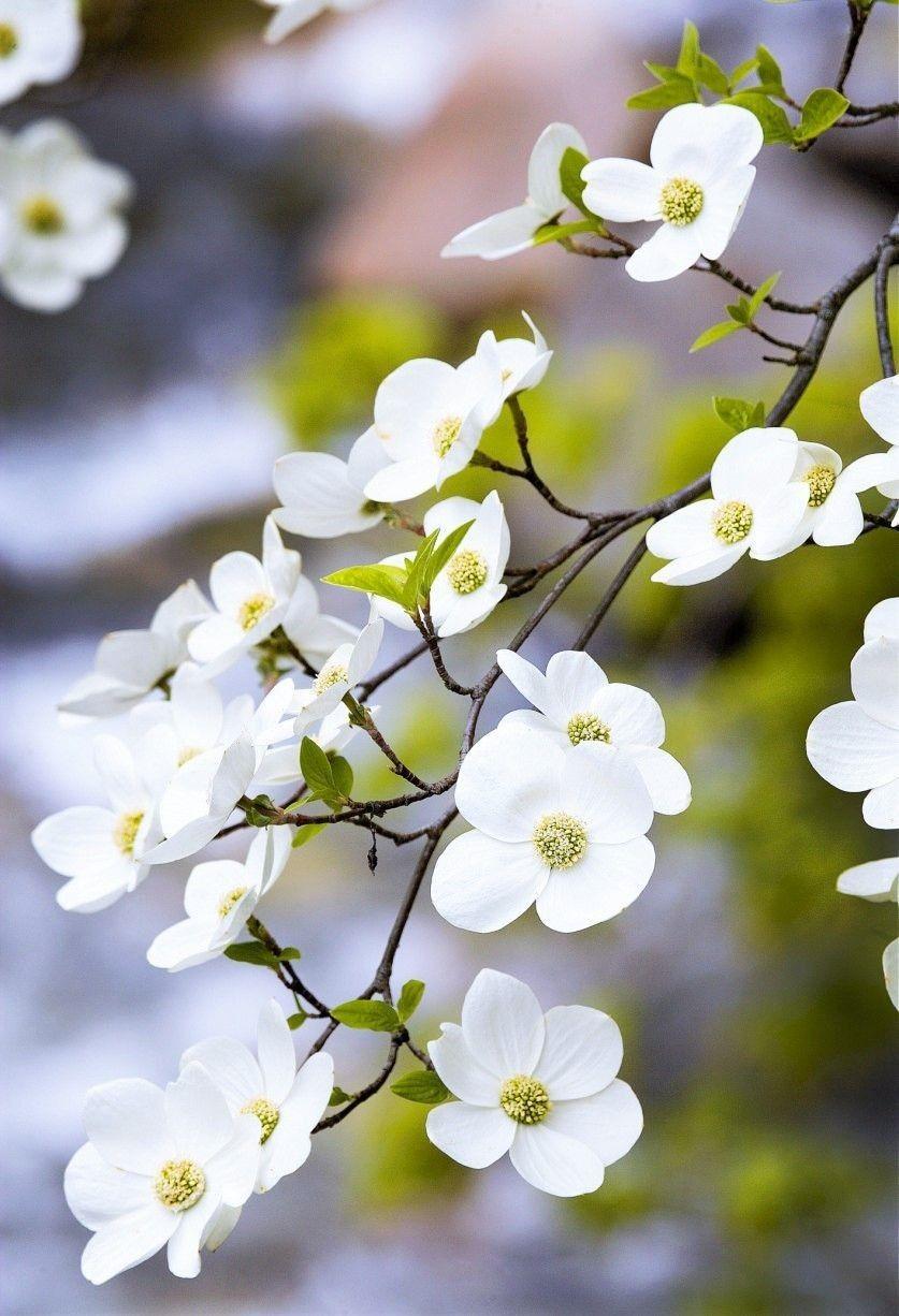 Albero Con Fiori Bianchi pin di ♡ely♡ su ♡ spring cottage.. (con immagini