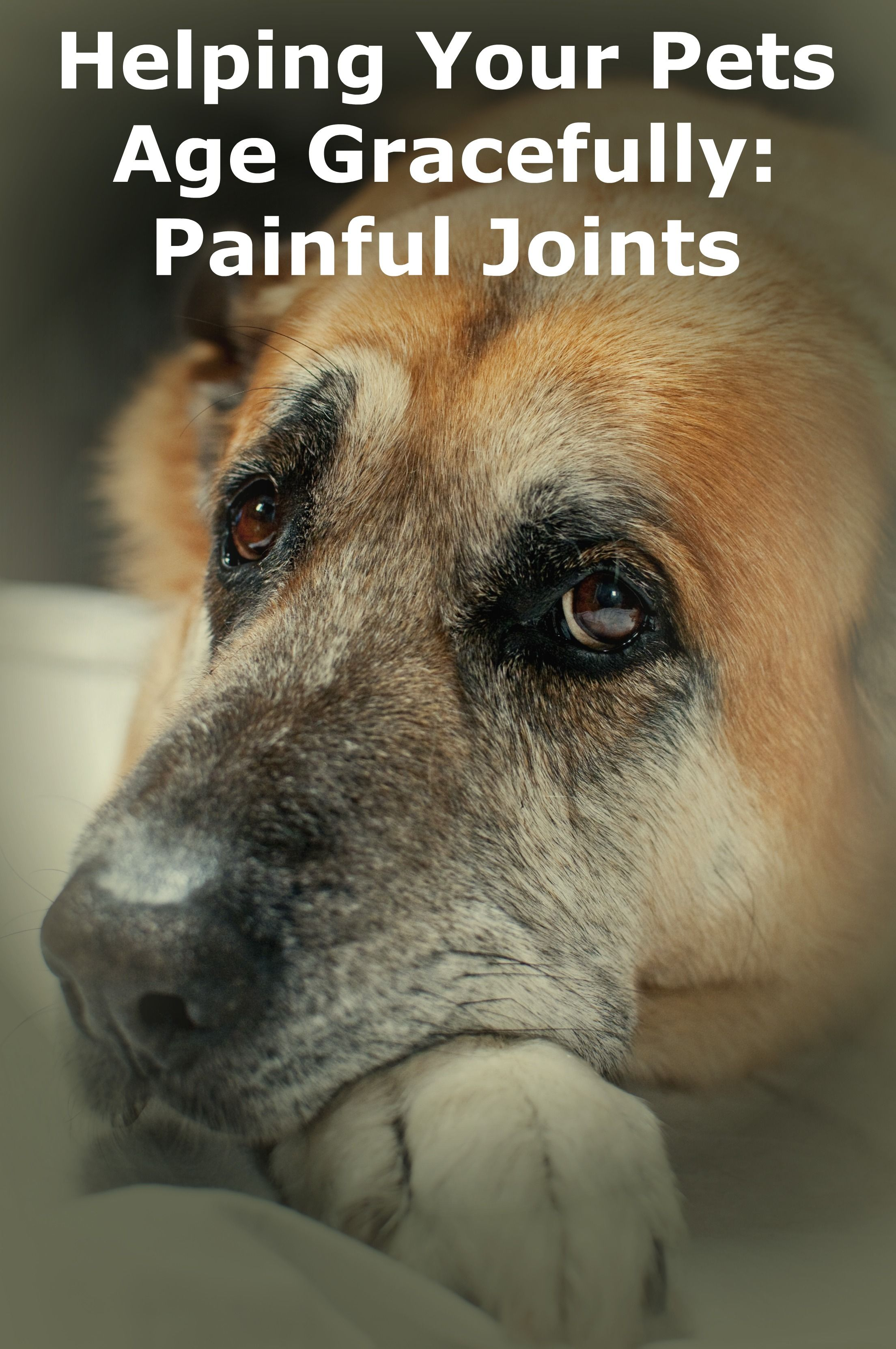 Helping Your Pet Age Gracefully Painful Joints Old Dogs Dog