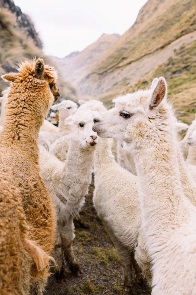 Photo of BestThings To Do In & Around Cusco, Peru