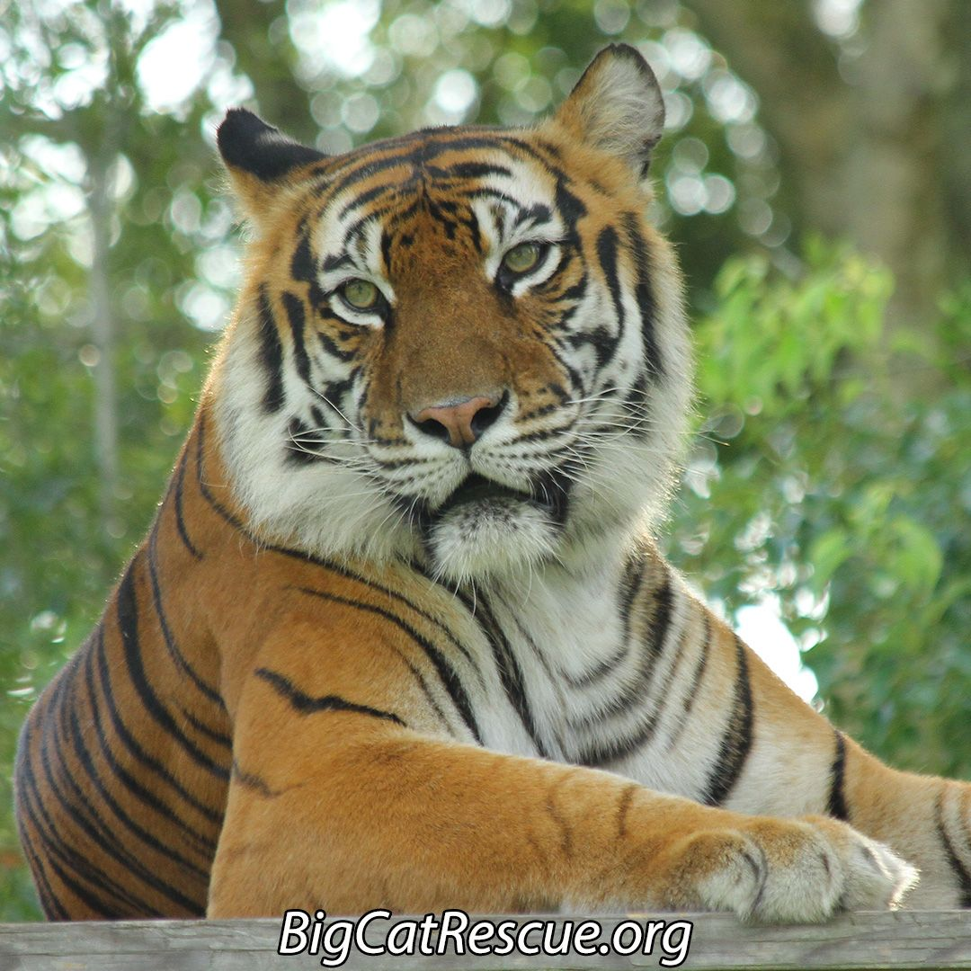 Amanda Tiger Is Not Sure What To Think About Hearing The