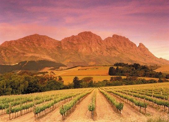 vineyard southafrica