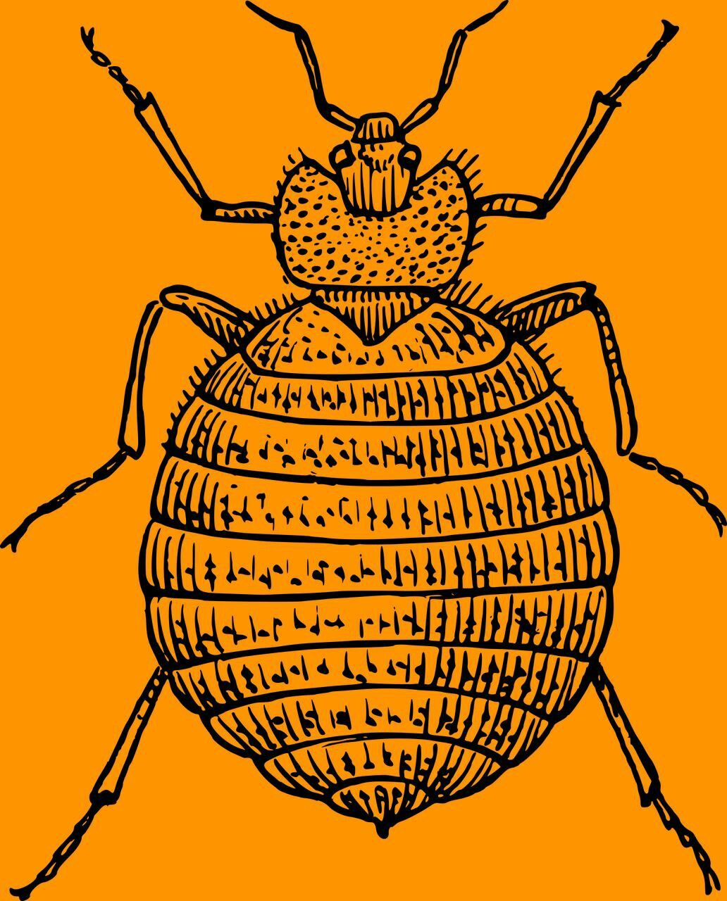 Read more about the symptoms of a bed bug infestation