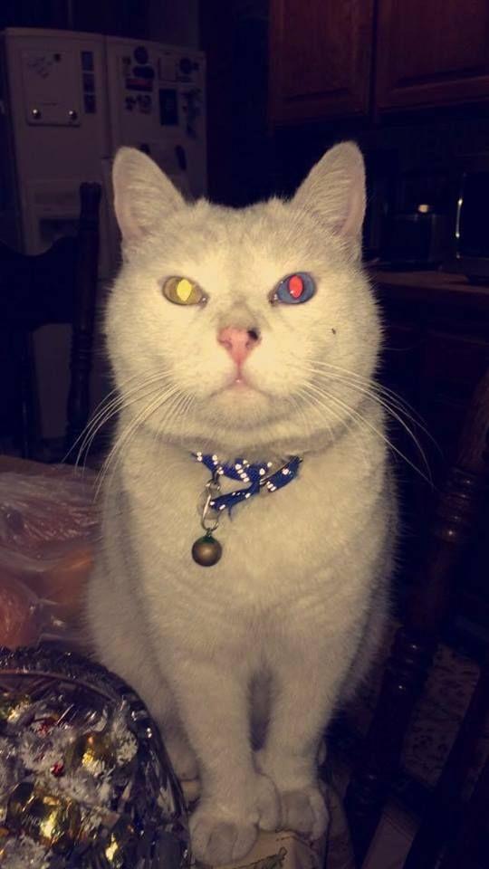My friends cat has some trippy eyes!!