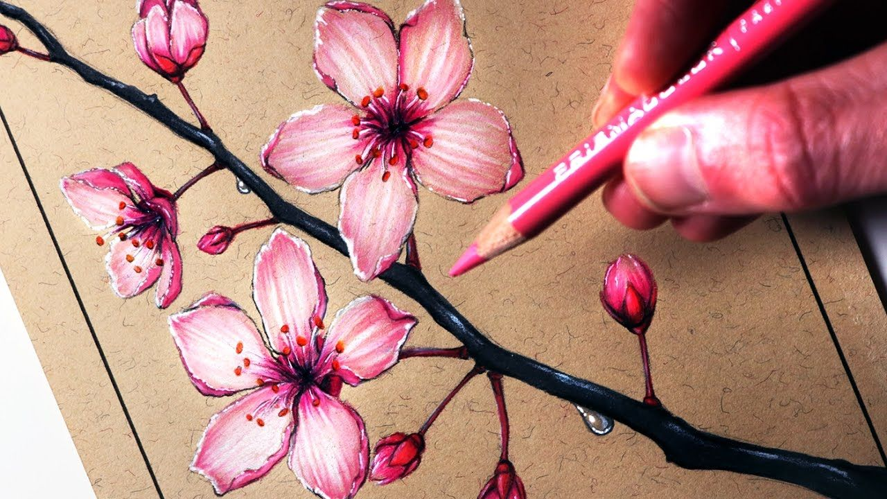 How To Draw Cherry Blossoms Youtube Cherry Blossom Drawing Cherry Blossom Painting Cherry Blossom Art