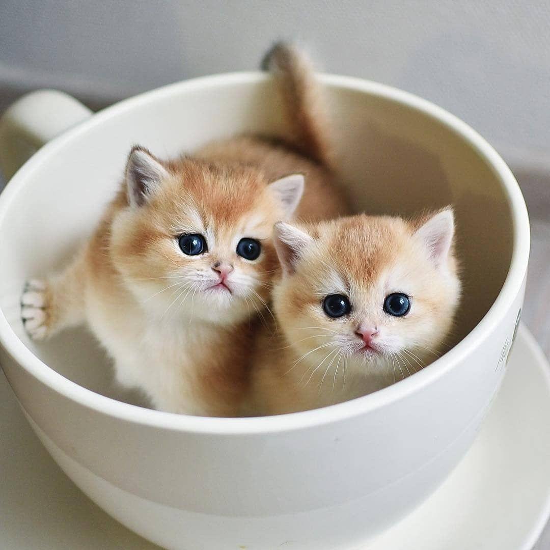 From Golden Celebrate Vlg Catstagram Pet Photooftheday