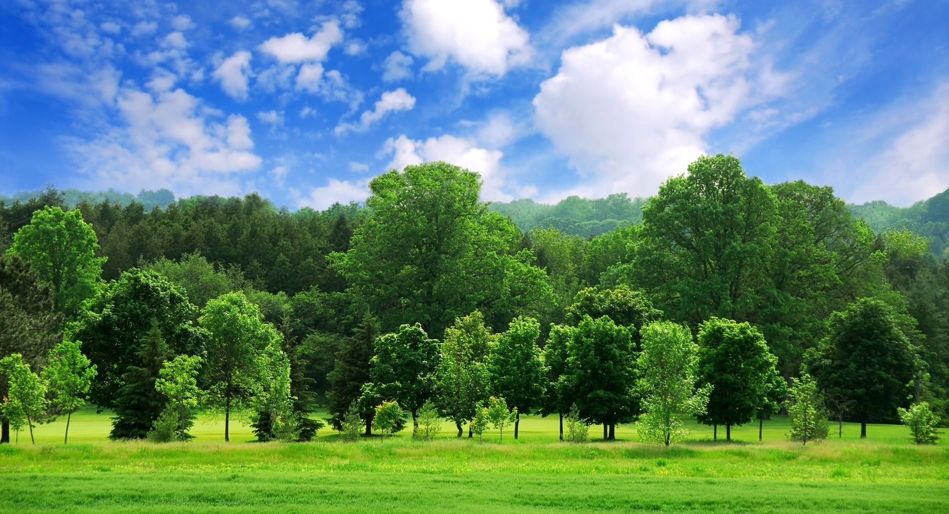 Tree Background Google Search Landscape Wallpaper