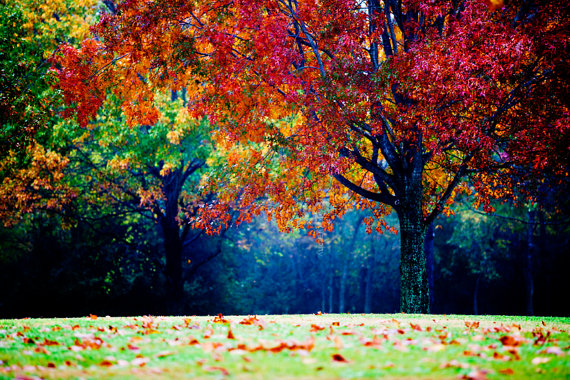 colorful landscape photography autumn tree fog and mist fall