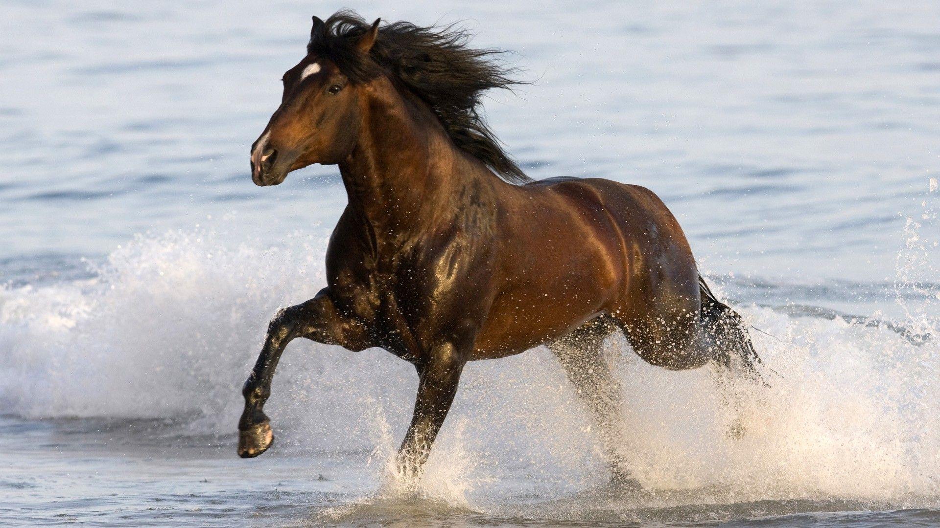 Beautiful Wallpaper Horse Desktop Background - 3c0384bd00e2e380a1f7f93829a43541  You Should Have_485685.jpg