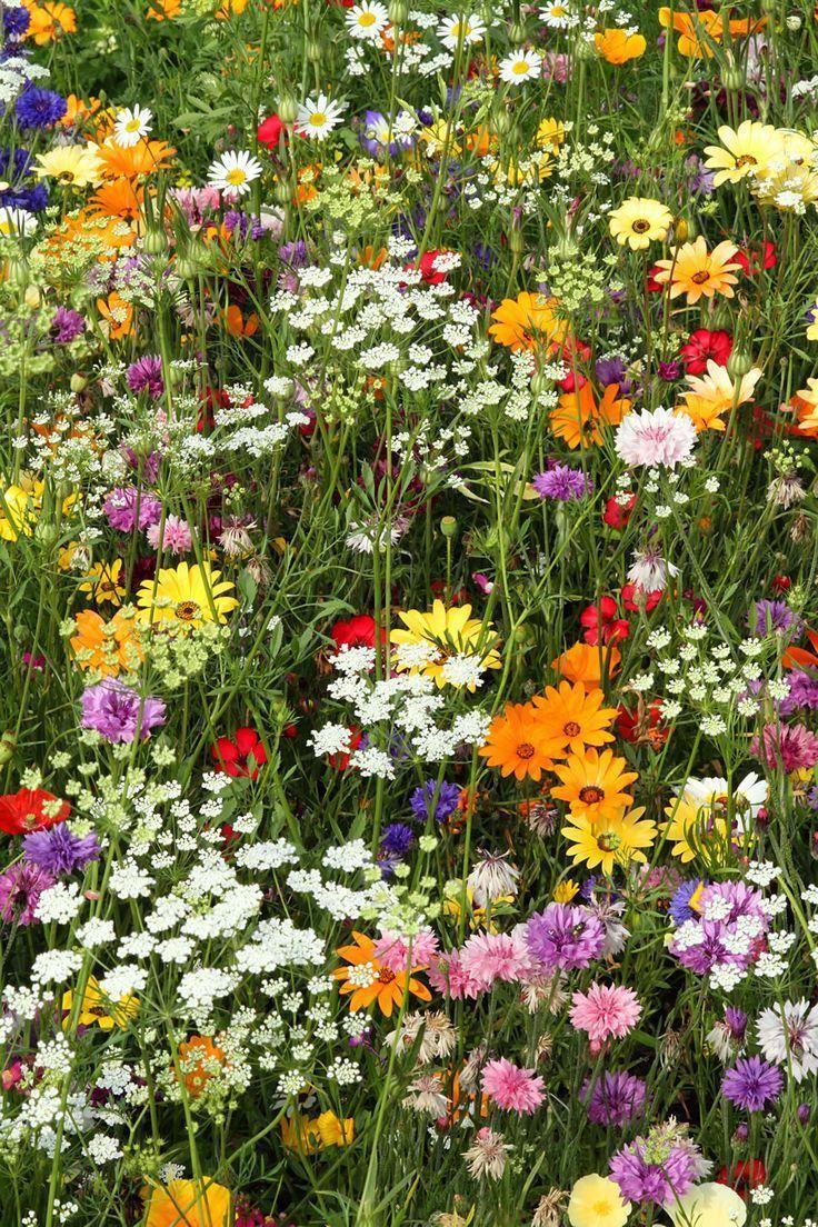 Cute flowers in garden flowergardenideasforfrontyard in