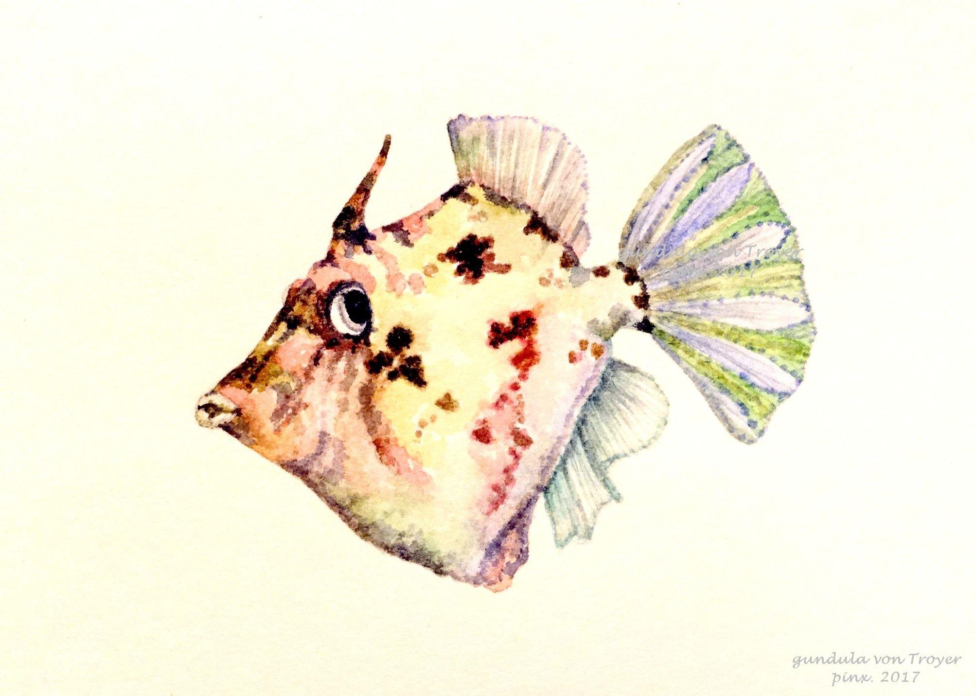 Feilenfisch Kanarische Inseln Aquarell Illustration Gundula Von Troyer Kanarische Inseln Illustration Aquarell