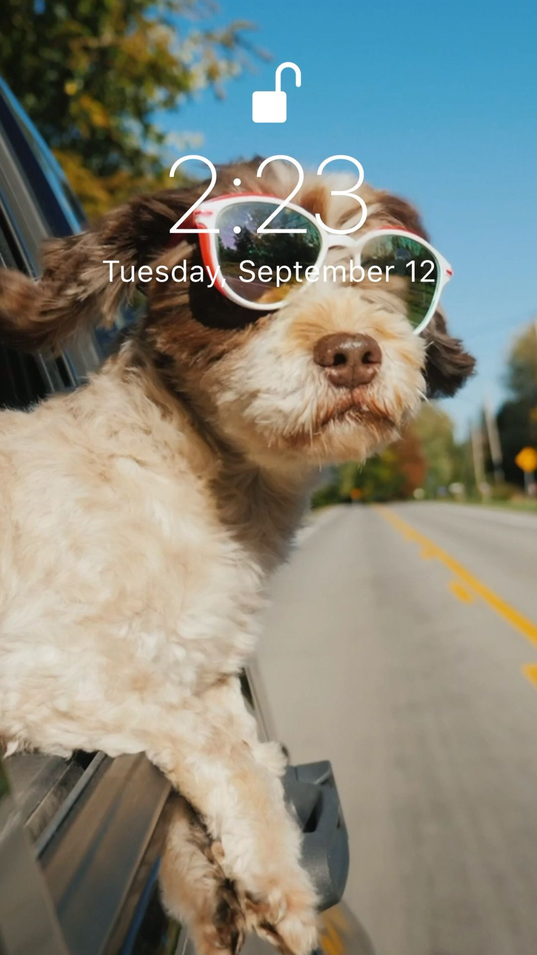 Iphone Wallpaper Videos Hintergrundbildiphone Tapete Funny Wallpaper For Your Iphone Xs Fro Live Wallpaper Iphone Funny Iphone Wallpaper Dog Wallpaper Iphone