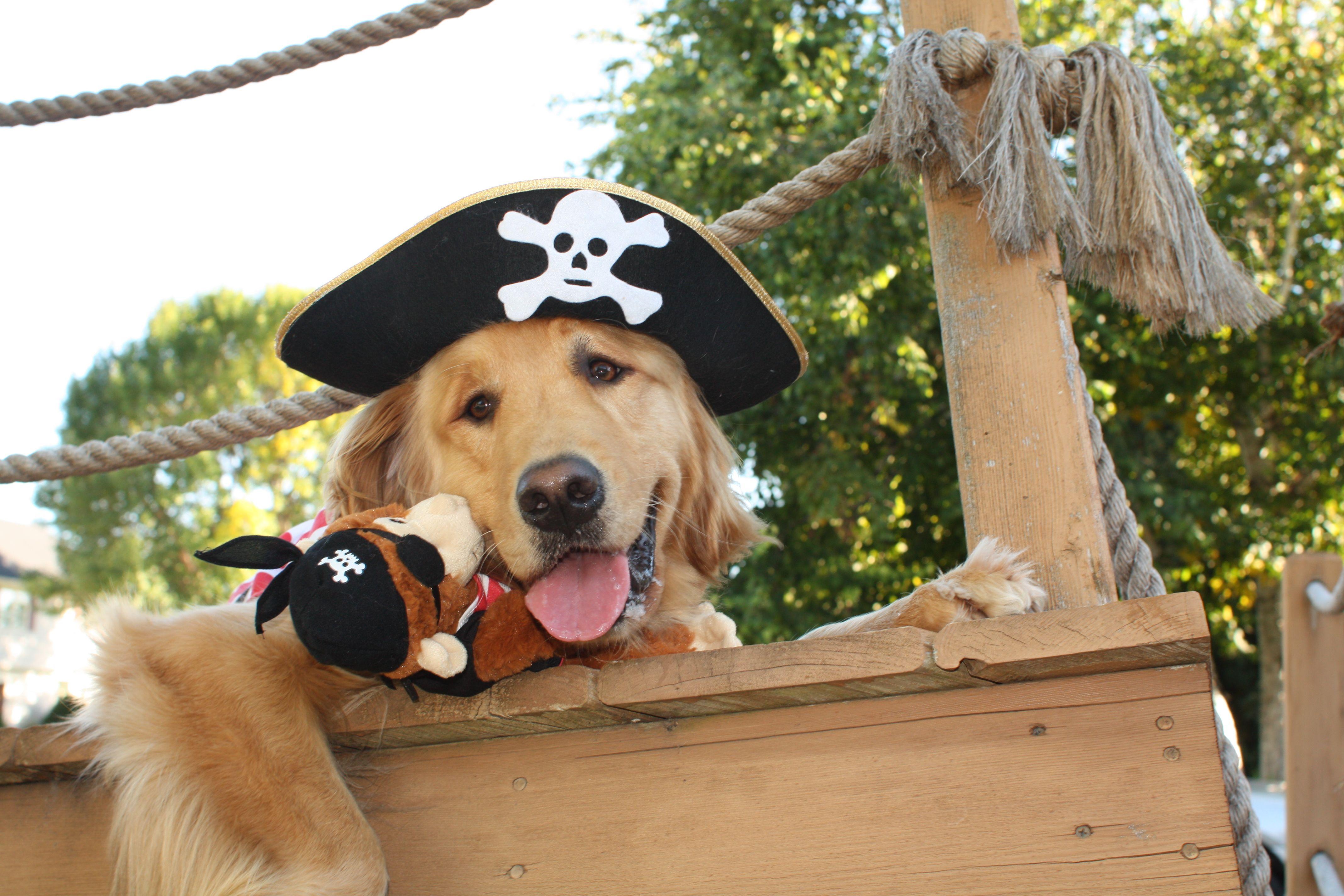 Pin By Jennifer Elizabeth On Just Finn A Golden Crazy Dog Lady Dog Lovers Golden Retriever