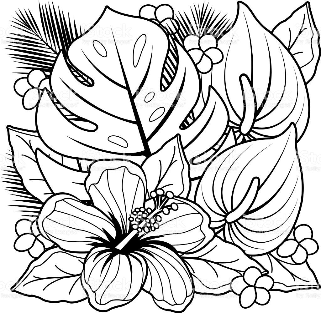 - Image Result For Tropical Plants Flower Coloring Sheets, Flower