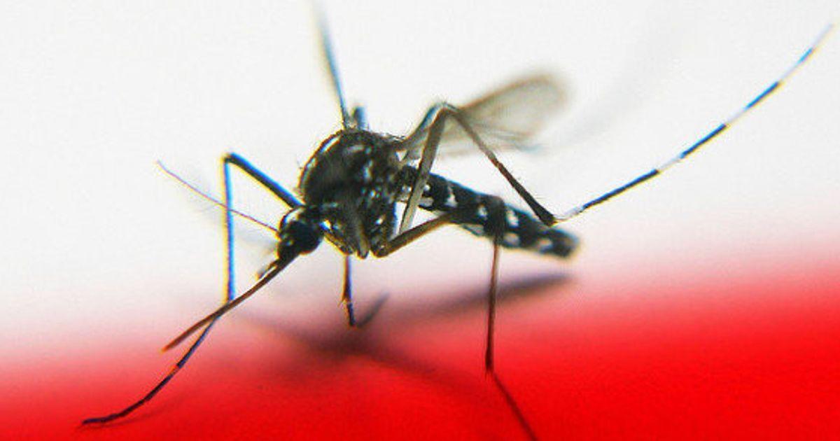 Esto es lo que le pasa a tu cuerpo cuando un mosquito te pica (INFOGRAFÍA) #mosquitoplants