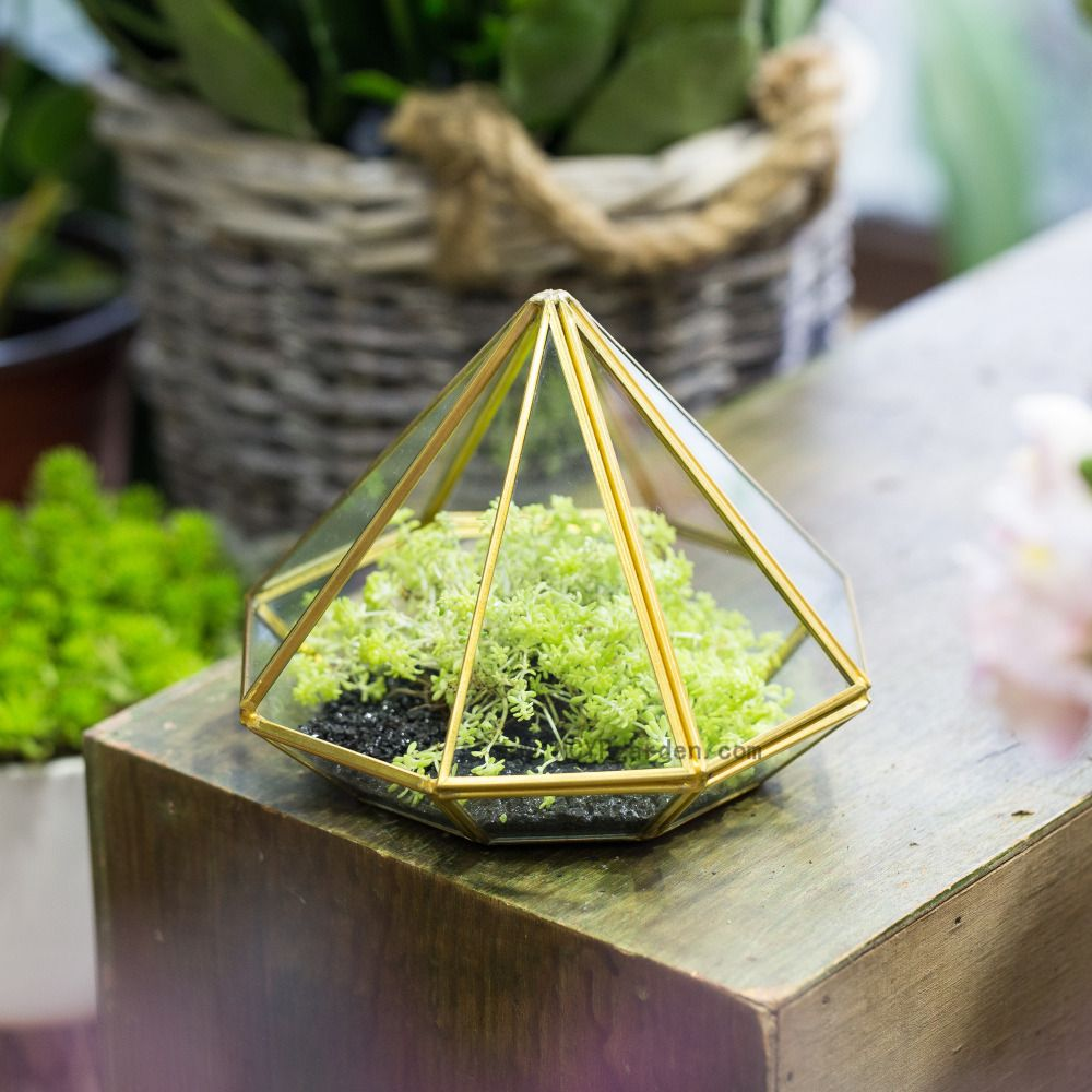 Open diamond glass geometric terrarium box succulent plant fern moss
