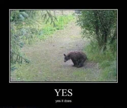 Do bears shit in the woods    | amusing quotes | Funny deer pictures