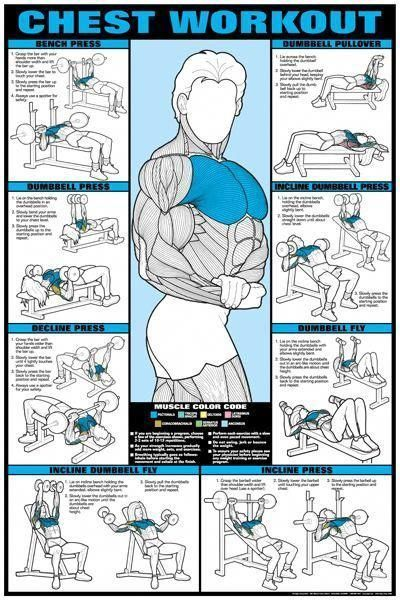 Chest Workout Professional Fitness Gym Instructional Wall Chart Poster (Co-Ed Edition) - Fitnus Corp. #chestworkouts