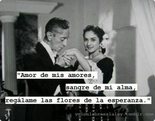 Amor De Mis Amores Dichos Y Frases Frases De Mexicanos Palabras