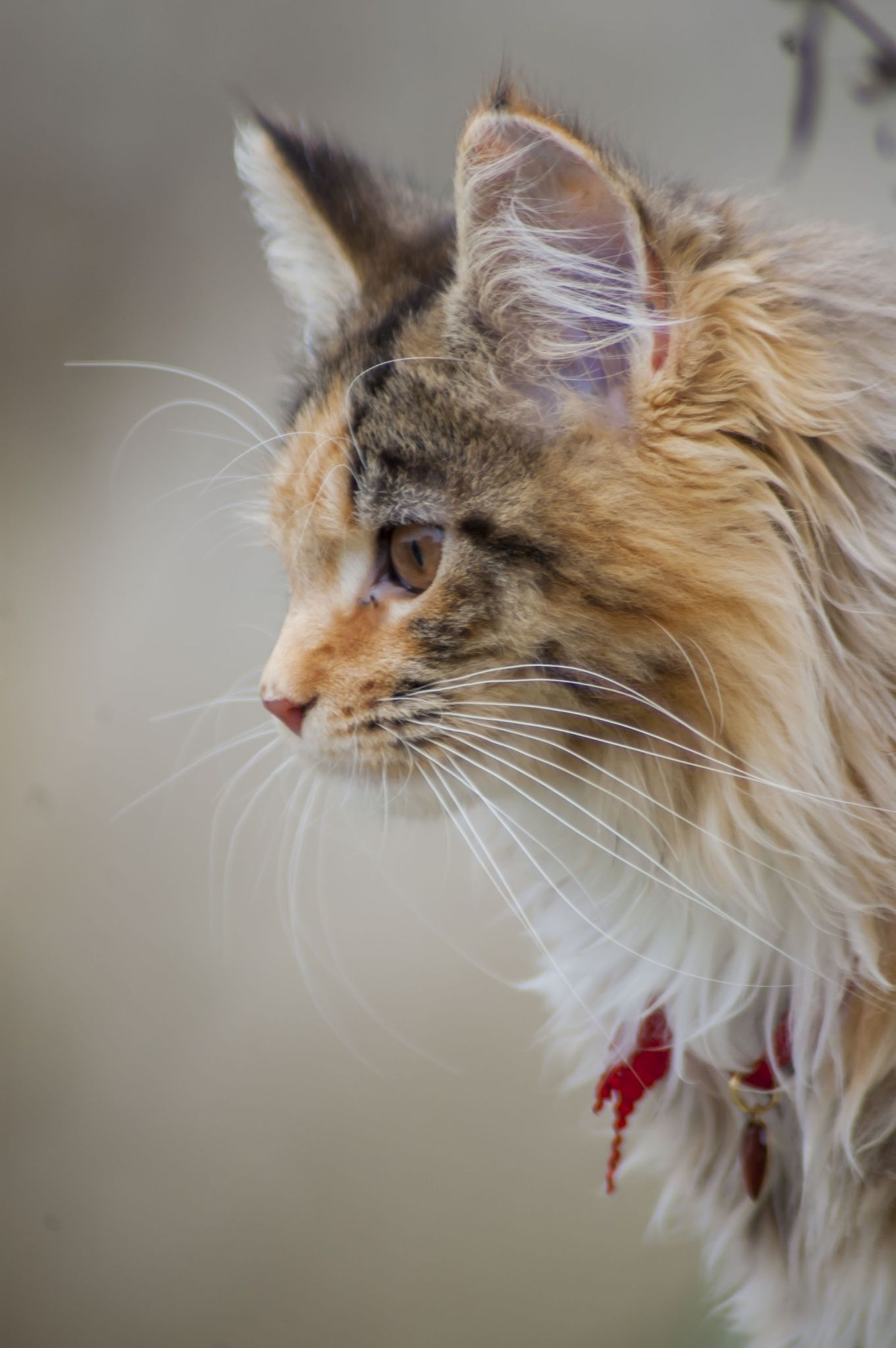 Jiji By Carole Galand On 500px Pretty Cats Kittens Cutest